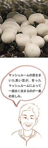 『黒田さん家のマッシュルーム02』の画像