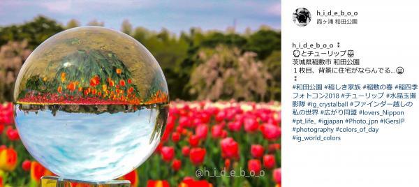 『『spring_1』の画像』の画像