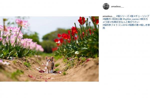 『『spring_3』の画像』の画像
